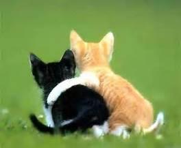hugging kittens